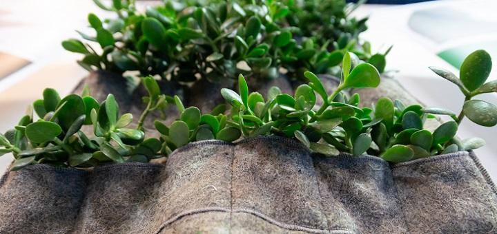 A Scirarindi con Daniela Ducato, il Verde ha 50 sfumature: tutto il piacere di abitare senza inquinare